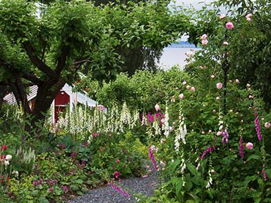 Omvisning i vakker hage ved Mjøsa
